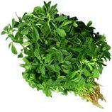 FENUGREEK (METHI 500GM Packet)