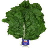 SWISS CHARD (200GMS Packet)