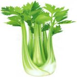 CELERY (LOCAL) (250GM Packet)
