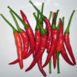 Thai Chilli 100gm packet