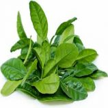 Lime Leaves 100gm Pack